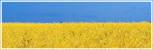 Украина: о том ли мы говорим?